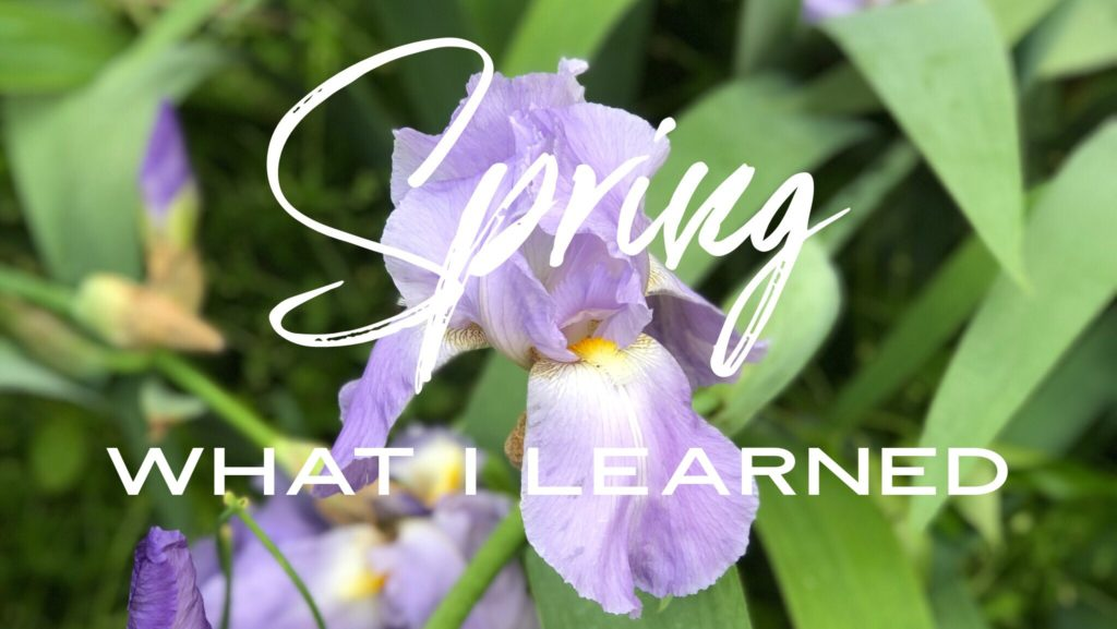 What I learned in Spring